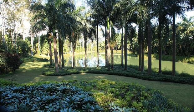 plantas jardim tropical:Jardim Tropical – Foto Guilherme Motta